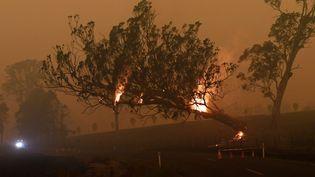 Un arbre en flammes à Corbago, dans l'Etat de Nouvelle-Galles du Sud (Australie), le plus touché par les incendies, le 5 janvier 2020. (TRACEY NEARMY / REUTERS)