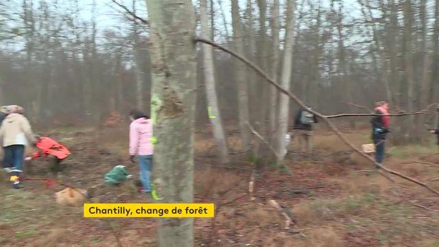 Opération de replantage d'arbres en forêt de Chantilly