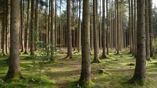 Coupé en France, transformé en Chine, le bois français parcourt des milliers de kilomètres. (GETTY IMAGES)