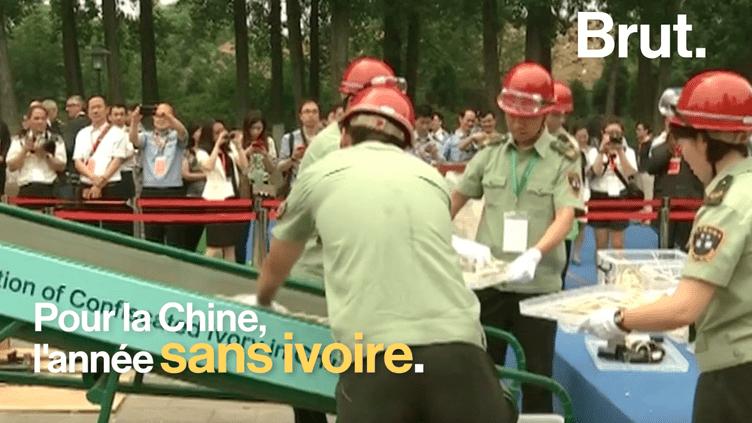 Le commerce de l'ivoire est désormais interdit en Chine (BRUT)