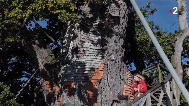 Patrimoine : à la découverte du chêne millénaire d'Allouville-Bellefosse