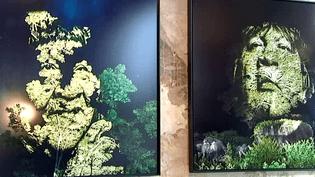 L'exposition Crying forest de Philippe Echaroux  (France3/culturebox)