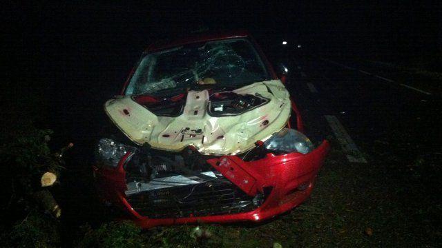Une femme de 29 ans est morte dans sa voiture, écrasée par un arbre, àMontbeton (Tarn-et-Garonne), le 31 août 2015. (P. LAGORCE / FRANCE 3)