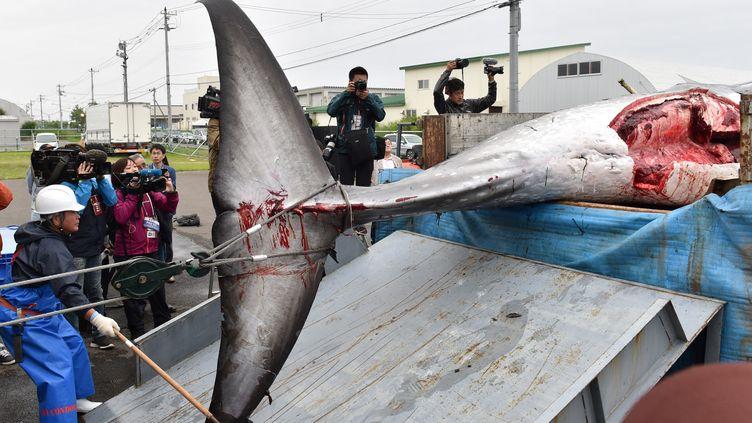 Une baleine capturée est déchargée d'un camion à Kushiro, dans la préfecture de Hokkaido, au Japon, le 1er juillet 2019. (KAZUHIRO NOGI / AFP)