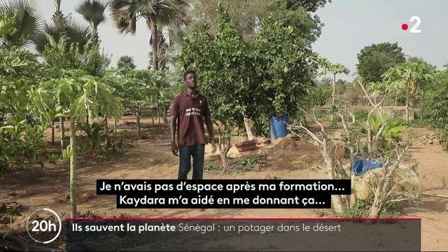 Ils sauvent la planète - Sénégal un potager dans le désert