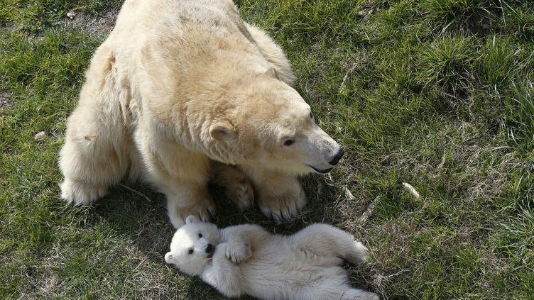 Raspoutine et Flocke, les deux ours polaires du parc Marineland d'Antibes. (VALERY HACHE / AFP)