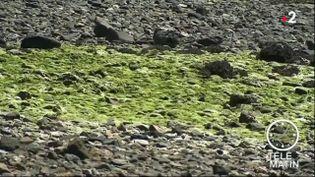 Des algues vertes sur une plage en Bretagne. (France 2)