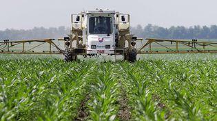 Un agriculteur de l'Illinois (Etats-Unis) vaporise son maïs avec du glyphosate, à Auburn, le 1er juin 2010. (SETH PERLMAN / AP / SIPA)