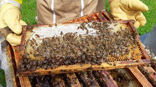 Une ruche sur exploitation en Meurthe-et-Moselle, en mai 2021 (ISABELLE BAUDRILLER / FRANCE-BLEU SUD LORRAINE)