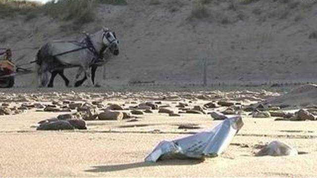 Des chevaux pour nettoyer les plages