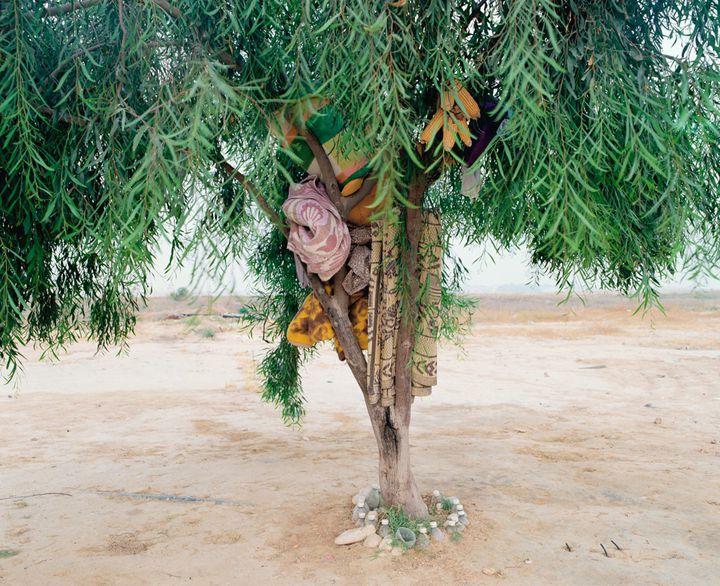 """Ron Amir, """"Bisharah and Anwar's Tree (L'arbre de Bisharah et Anwar""""), 2015  (Ron Amir)"""