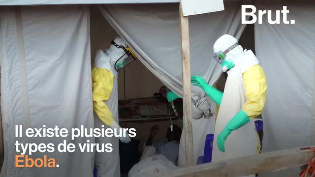 Une grave épidémie du virus Ebola a déjà tué des dizaines de personnes et continue de se propager. Les médecins de l'ONG ALIMA luttent pour sauver les malades. Brut s'est rendu sur place pour les rencontrer.