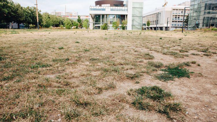 De l'herbe séchée à Strasbourg (Bas-Rhin), le 21 juillet 2019. (ABDESSLAM MIRDASS / HANS LUCAS / AFP)