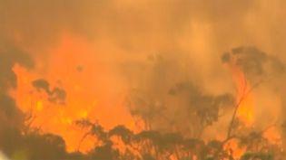 De violents incendies dévastent la région d'Adelaide Hills (Australie), le 3 janvier 2015. (  REUTERS)