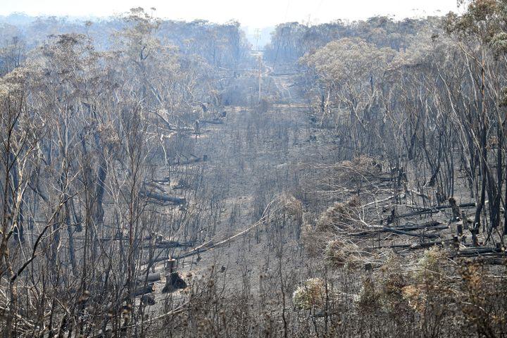 """Des arbres brûlés à perte de vue à Mount Wilson, au cœur du site naturel des """"Blue Mountains"""", situé à 120 kilomètres au nord-ouest de Sydney, le 18 décembre 2019. (SAEED KHAN / AFP)"""