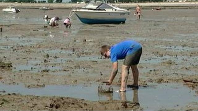 Morbihan : les grandes marées du mois d'août font le bonheur des pêcheurs à pied