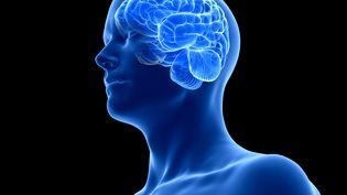 Image d'illustration montrant la taille que prend notre cerveau dans notre boite crânienne. (SEBASTIAN KAULITZKI / SCIENCE PHOT / SKX / AFP)