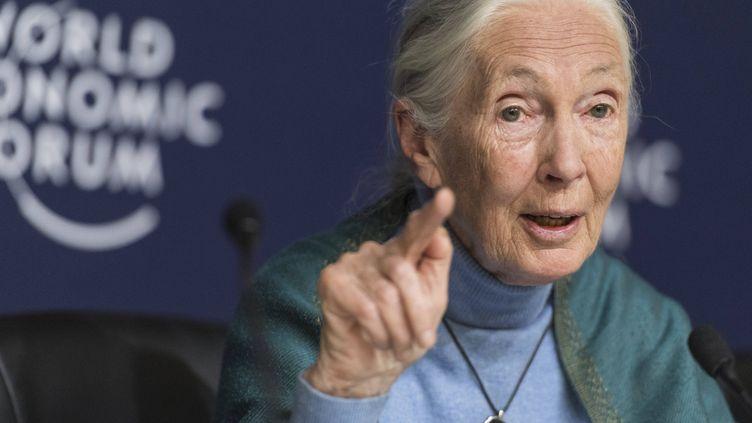 Jane Goodall le 22 janvier 2020 au Forum économique de Davos, en Suisse, durantune conférence de presse (ALESSANDRO DELLA VALLE / AP / SIPA)
