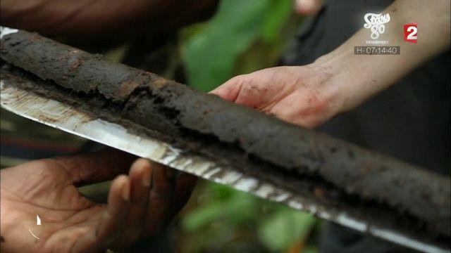 """VIDEO. """"13h15"""". Climat : pourquoi il faut protéger la plus grande tourbière tropicale qui séquestre le dioxyde de carbone"""