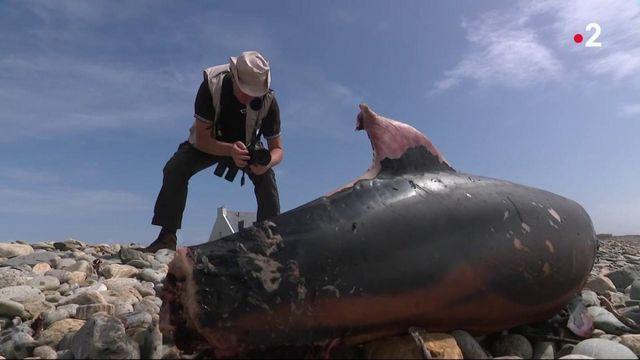 Dauphins échoués : les techniques de pêche mises en cause