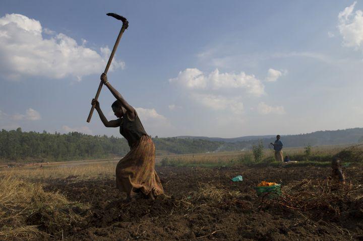 Une femme travaillant dans un champ près de Ngozi (nord du Burundi) le 20 juillet 2015. (PHIL MOORE / AFP)