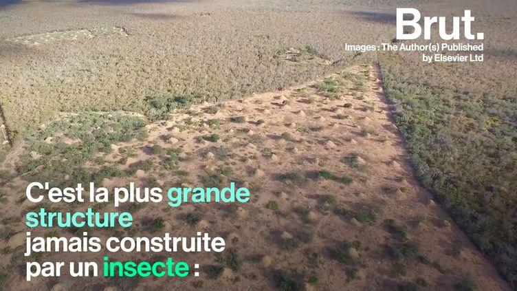 VIDEO. Une termitière aussi grande que la Grande-Bretagne découverte au Brésil (BRUT)