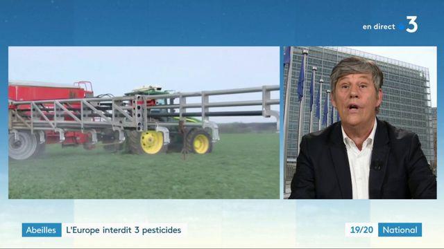 Abeilles : l'Europe interdit trois pesticides