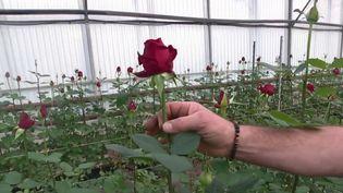 France 3 s'est rendue dans le Var où quelques rares producteurs de roses résistent face à la concurrence mondiale. (France 3)