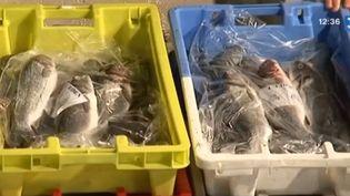 Des poissons pêchés au large des Sables d'Olonne (Vendée), le 9 janvier 2014. ( FRANCE 3 / FRANCETV INFO)