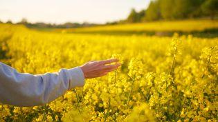 La crise sanitaire permettra-t-elle de faire évoluer les relations entre les Français et le monde agricole ? Comment les mutations agricoles vont-elles accompagner l'évolution actuelle ? Illustration (ANDRIY ONUFRIYENKO / MOMENT RF / GETTY IMAGES)