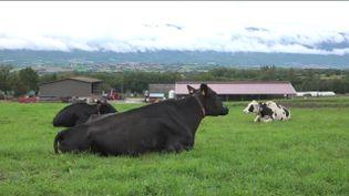 Agriculture : en Haute-Savoie, des robots intelligents réalisent la traite des vaches (FRANCEINFO)