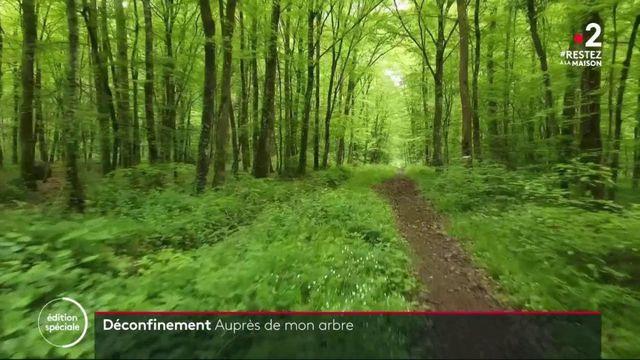 Déconfinement : les balades en foret autorisées à partir du 11 mai partout en France