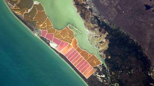 Les couleurs du parc naturel Ria Lagartos, une zone de mangrove au bord du golfe du Mexique, et au nord-est du Yucatan. (THOMAS PESQUET / TWITTER)