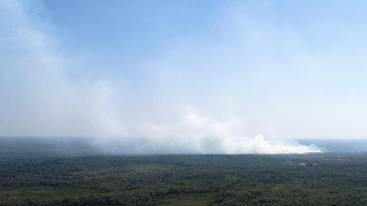Un panache de fumée au-dessus de Pocone (Brésil), dans la région du Pantanal, le 1er août 2020. (ROGERIO FLORENTINO / AFP)