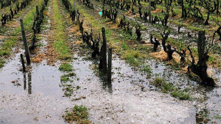 Un vignoble frappé par la grêle le 17 juin 2013 à Vouvray (Indre-et-Loire). ( MAXPPP)