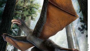 Le dinosaure Yi qi présenté dans la revue Nature, le 29 avril 2015. ( AP / SIPA )