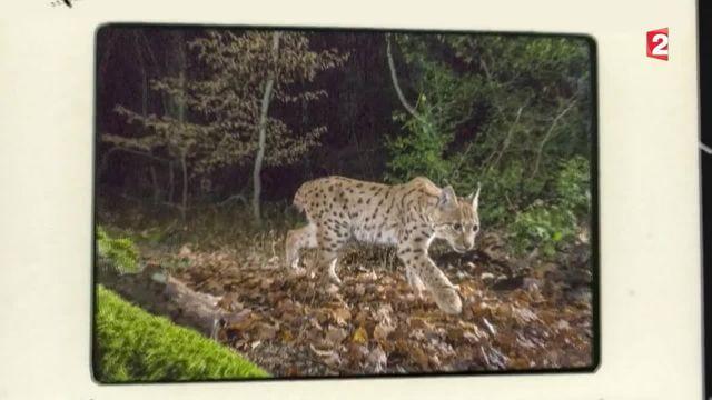 Feuilleton de la semaine : chasseurs d'images (1/5)