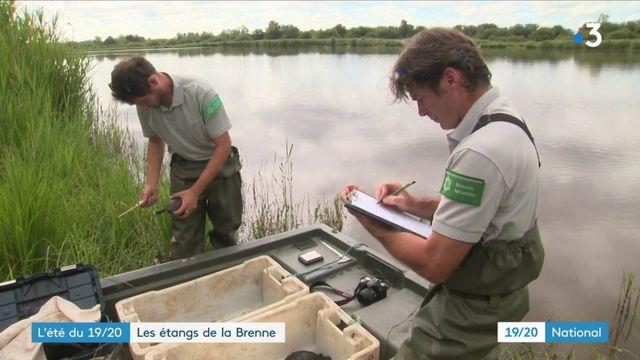 Découverte : les étangs de la Brenne