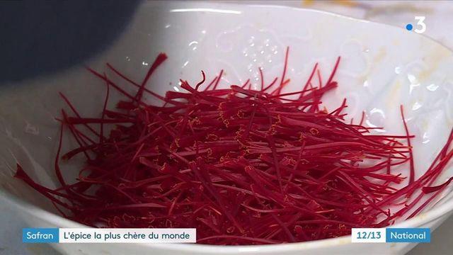 Aube : la cueillette du safran, l'épice la plus chère du monde