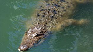 Le nombre de crocodiles marins a explosé dans le nord de l'Australie, au point de relancer le débat sur l'opportunité de les chasser  (RAFAEL BEN-ARI/ CHA/NEWSCOM/SIPA / SIPA USA)