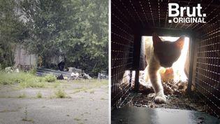 VIDEO. À Bordeaux, Marine se mobilise pour limiter la propagation des chats errants (BRUT)