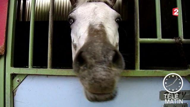 n trafic de viande de cheval avariée démantelé dans le sud de la France