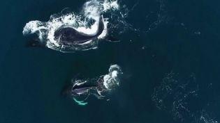 Brésil : quand les baleines font la parade (France 2)