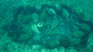 Les amphores datant du 3e siècle avant notre ère reposaient par 20 mètres de fond près des iles de Lérins. (Images sous-marines Marc Langleur / Capture d'écran)