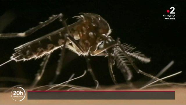 Soleil et pluie : gare aux moustiques !