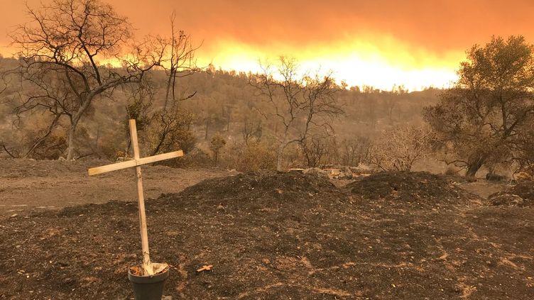 Au moins 31 personnes sont mortes dans les incendies qui ravagent la Californie depuis la semaine passée. (GREGORY PHILIPPS / RADIO FRANCE)