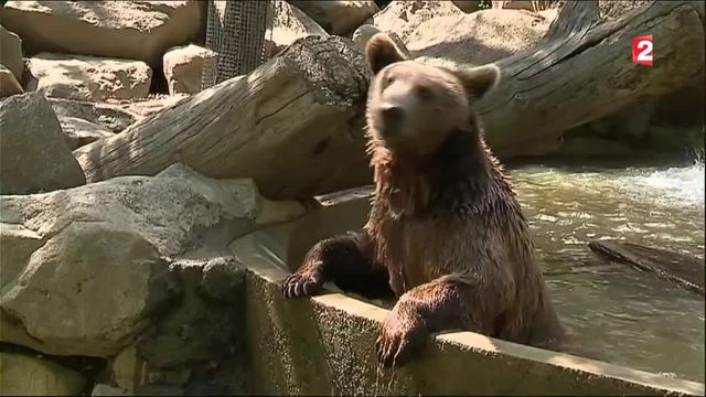 Pyrénées : un parc animalier permet de dormir avec les ours.