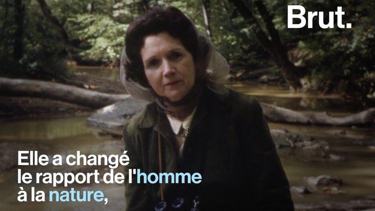 VIDEO. La vie de Rachel Carson, biologiste marin et environnementaliste américaine (BRUT)