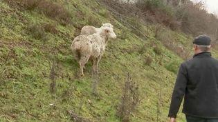Ruralité : des agriculteurs utilisent des GPS pour géolocaliser leurs troupeaux (France 2)