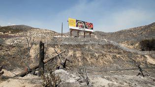"""L'incendie """"Blue Cut Fire"""" a détruit plus7 000 hectares, et fait évacuer plus de 80 000 personnes en 2016, en Californie. (JOSH EDELSON / AFP)"""